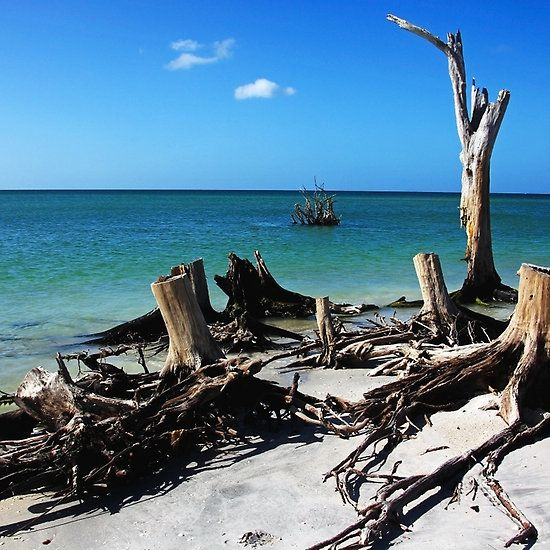 Tree Stump Beach P State Park Englewood Florida