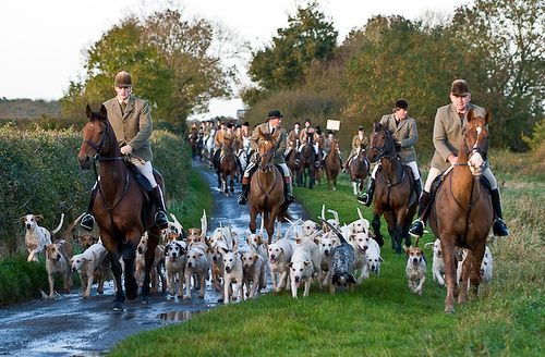 The Cottesmore Hunt trail hunting