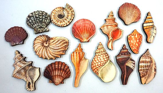 sea shells collection of 15 laser cut wood craft by porkchopshow craft supplies tools
