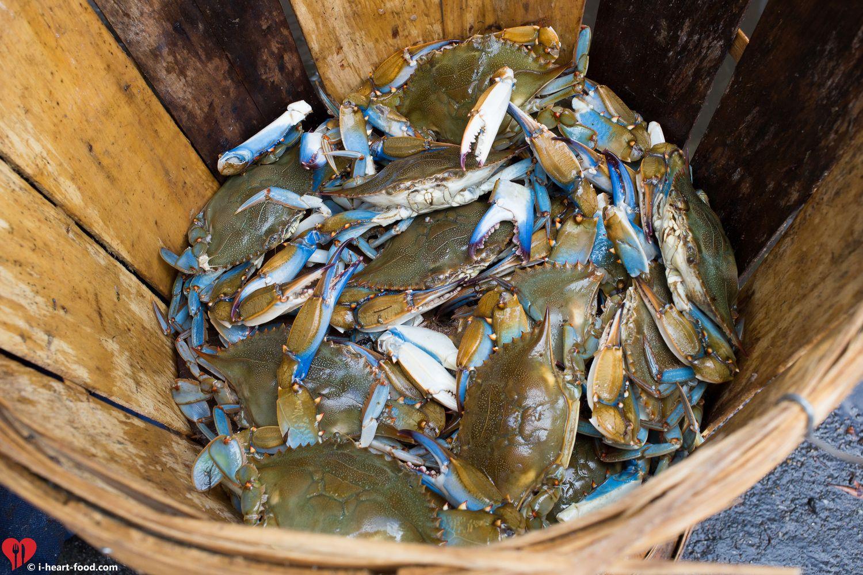 Blue crabs jimmies from knotts island va knotts island