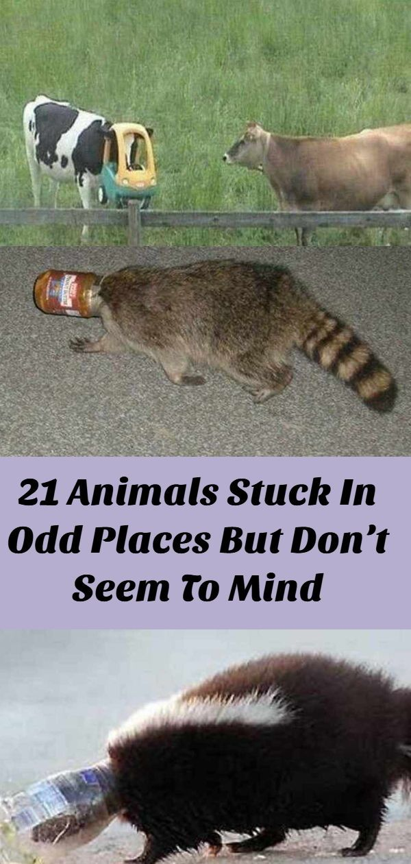 21 Animals Stuck In Odd Places But Don't Seem To Mind in