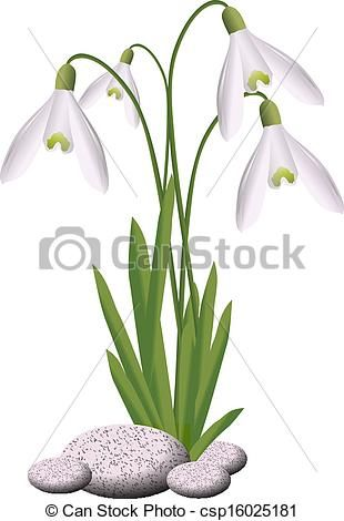 Vector Of Snowdrop Csp16025181 Search Clip Art Illustration Drawings And Clipart Eps Vector Graphics Images Flower Art Clip Art Illustration