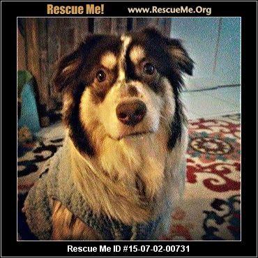 New York Australian Shepherd Rescue ― ADOPTIONS ― RescueMe