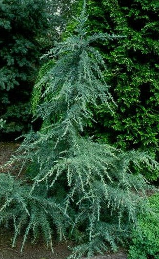15 Types of Evergreens for Landscaping | The Home Depot