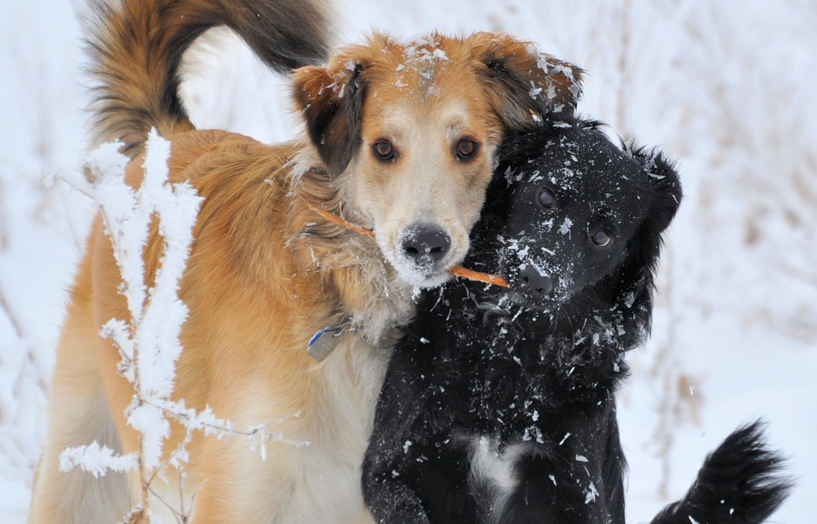 How To Protect Your Pet During Winter And Cold Weather Dog Pens Pets Your Pet