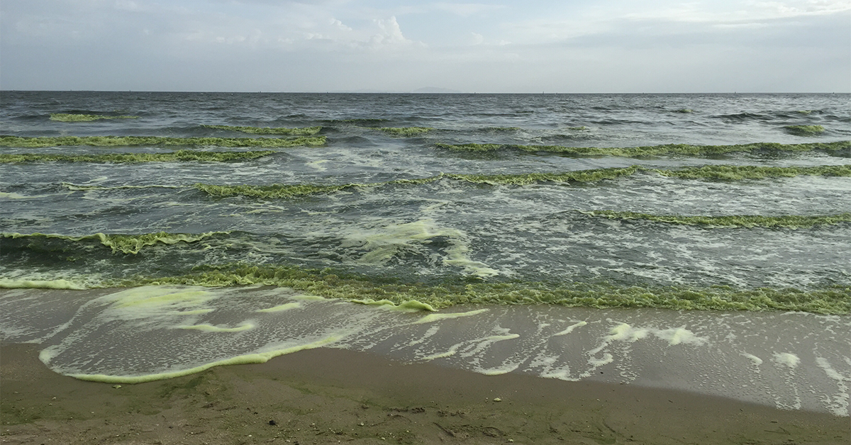 For three billion years Marine Phytoplankton has supported virtually all living creatures in the Ocean. It contains a unique combination of life sustaining  nutrients including; Omega 3 essential fatty acids, protein, chlorophyll, vitamins, minerals and trace elements