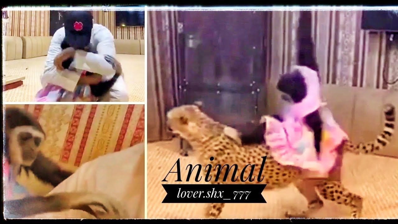 Youtube Animal Lover Animals Fictional Characters