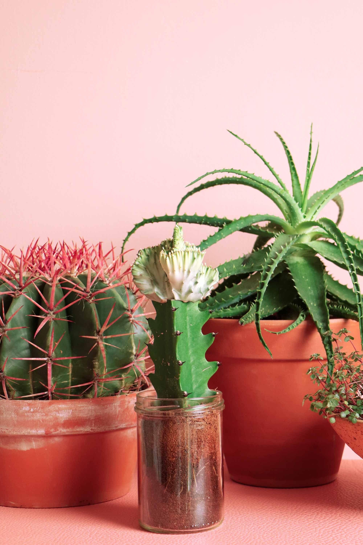 My Attic Voor Vtwonen Plants On Pink Ferocactus Fotografie Marij