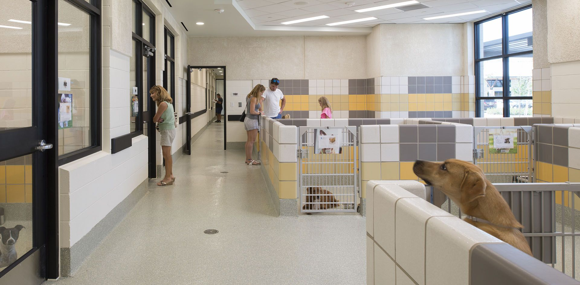 9 Hspca State Of The Art Animal Shelter And Wildlife Center By Jackson Amp Ryan Architects Animal Shelter Animals Spca