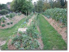Permaculture Design On Flat Ground Google Search Jardin Foret