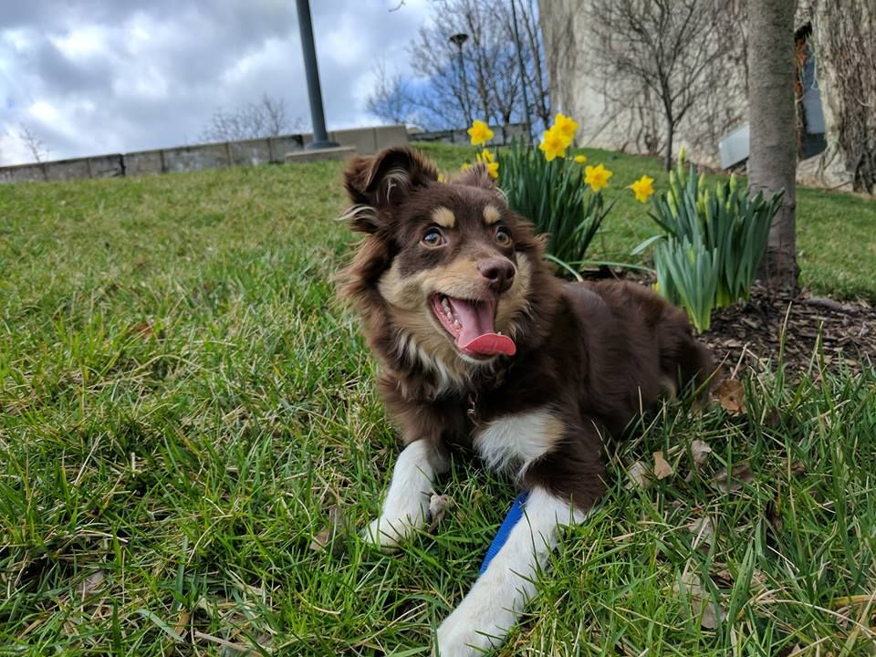 Lacy's First Spring