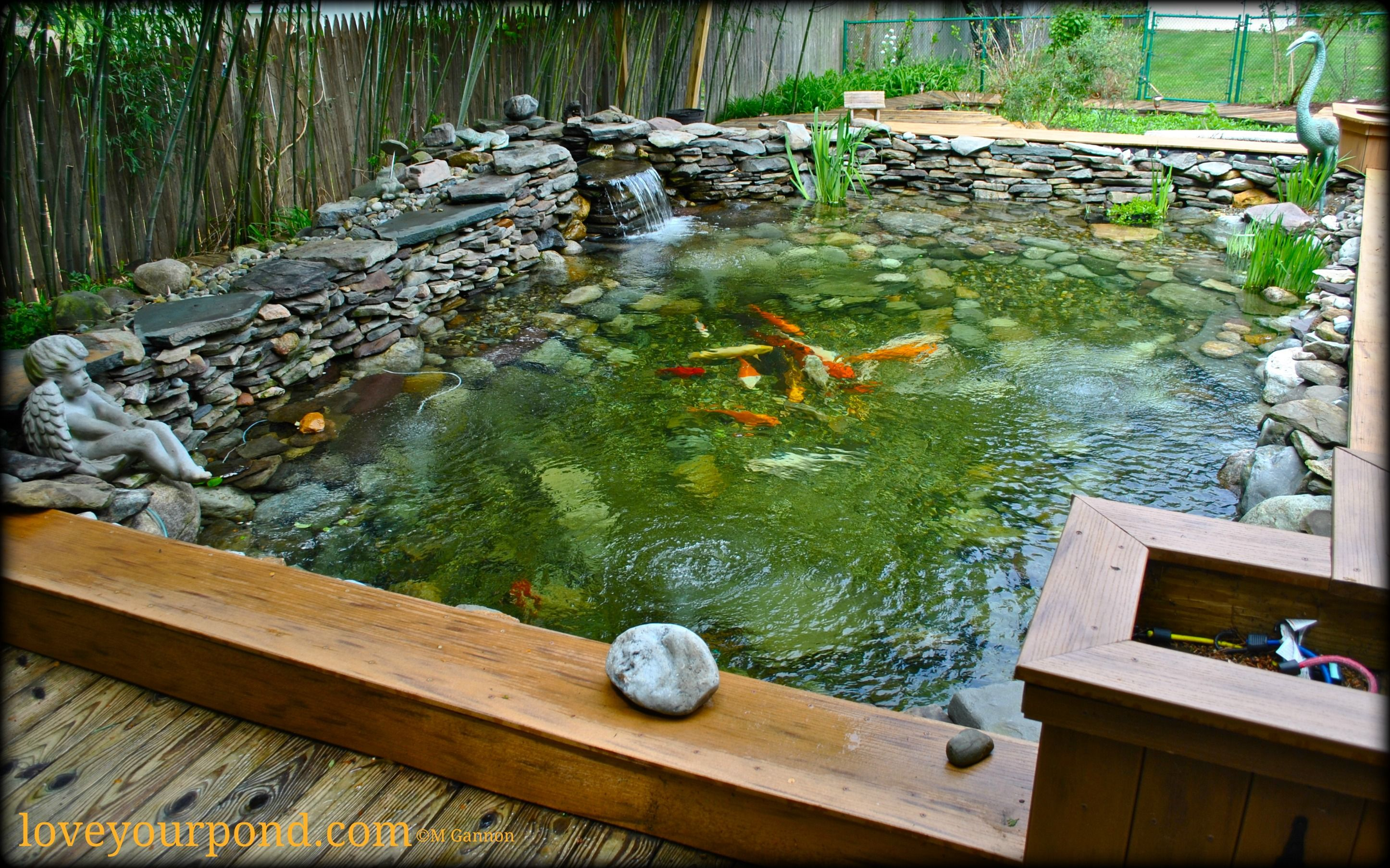 Semi above ground koi pond installation deisgned and for In ground koi pond