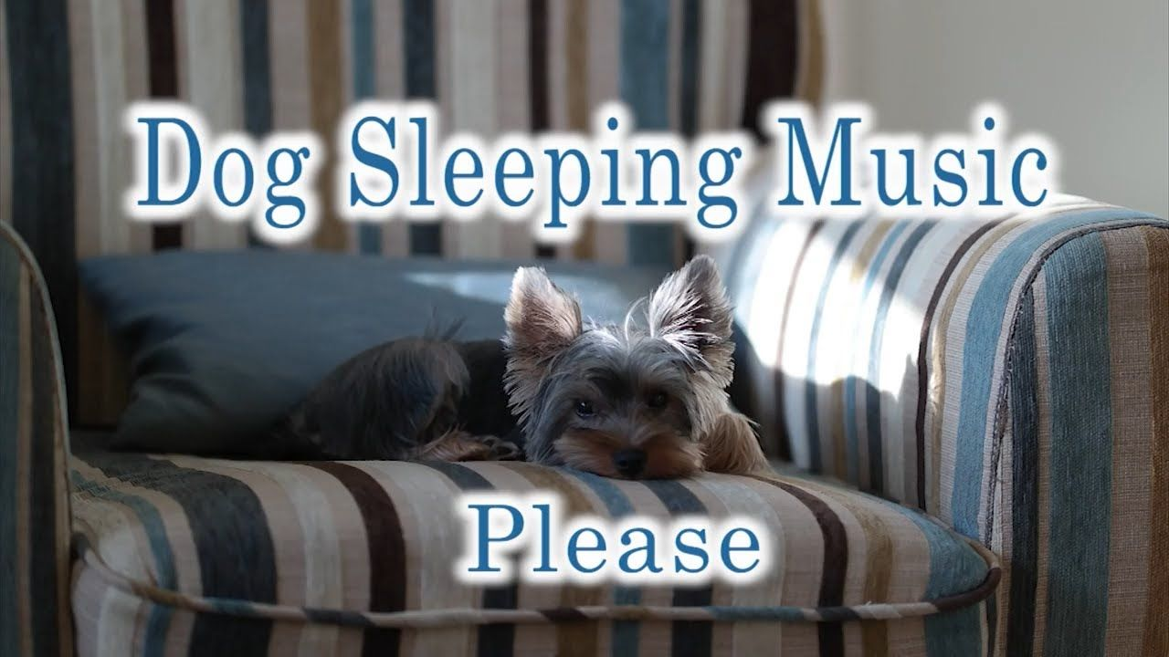Dog Sleeping Music For Peaceful & Calm Pet Sleep https
