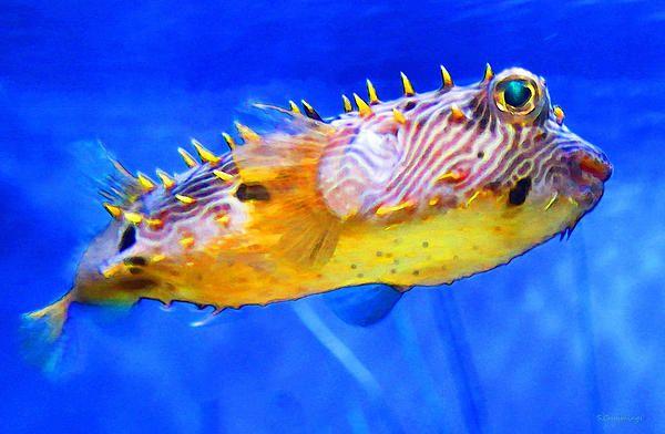 Magic Puffer Fish Art By Sharon Cummings Puffer Fish Art Fish Art Art
