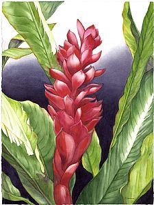 Just Call Me Ginger Watercolor Flowers Hawaiian Art Flower Painting