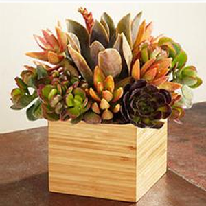 succulent garden. These gorgeous succulents are a huge Spring trend! See all our favorite picks on http://blog.gifts.com/gift-trends/spring-trend-succulents#