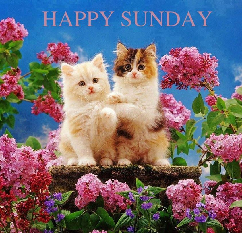 Happy Sunday Cats