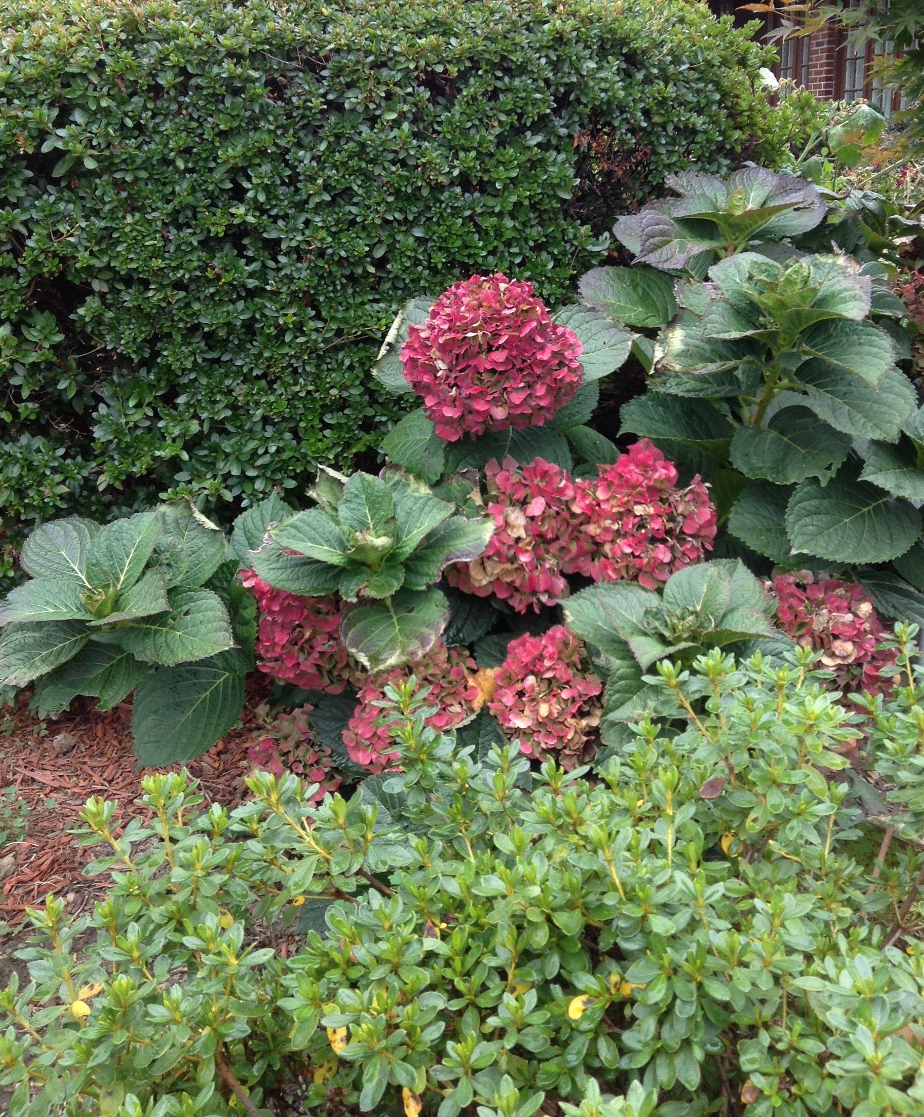 Pin By Valeria Kondratiev On Seasons Seasons Plants Garden