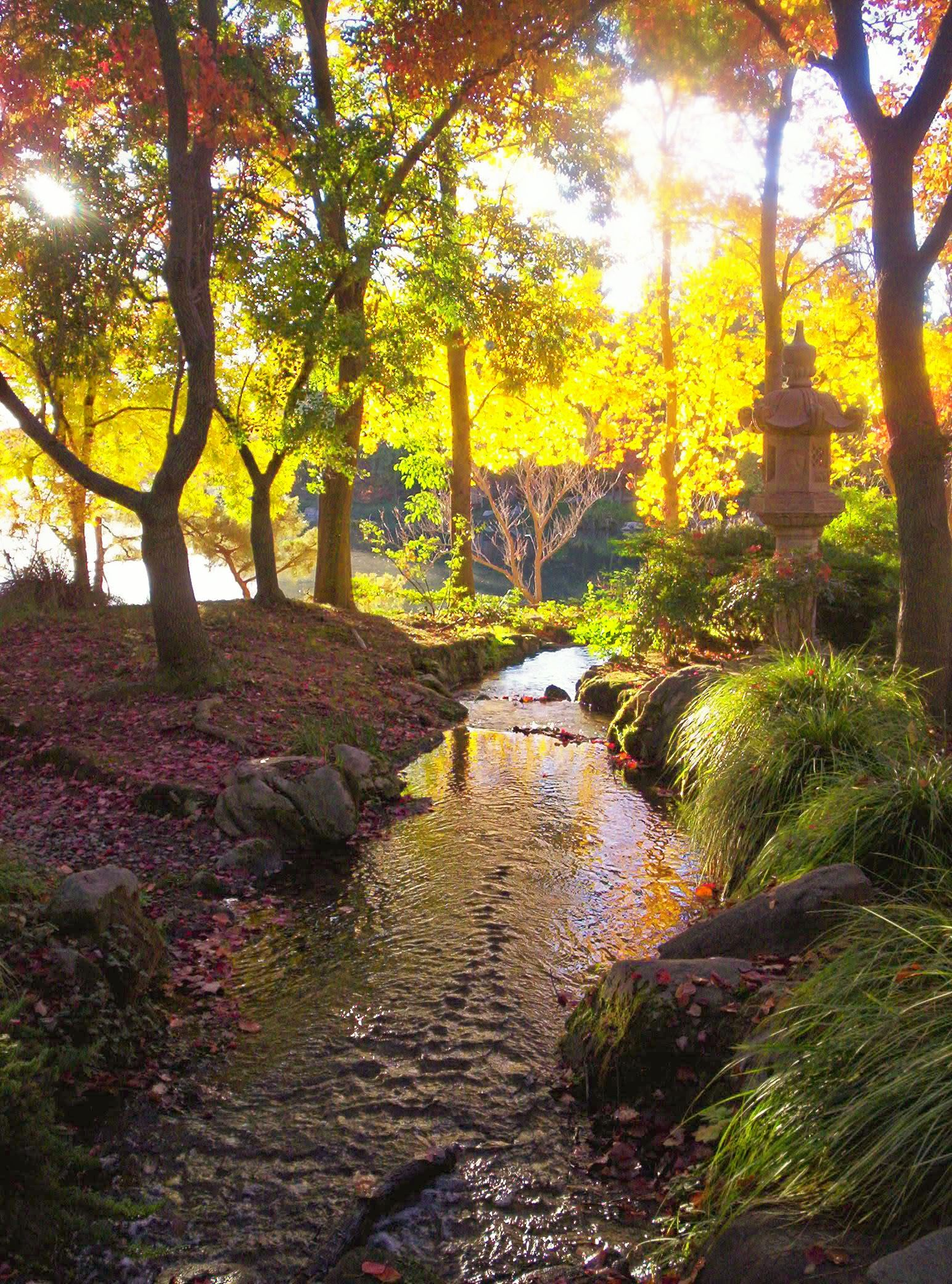 Japanese Garden Woodward Park Fresno Ca Photo By