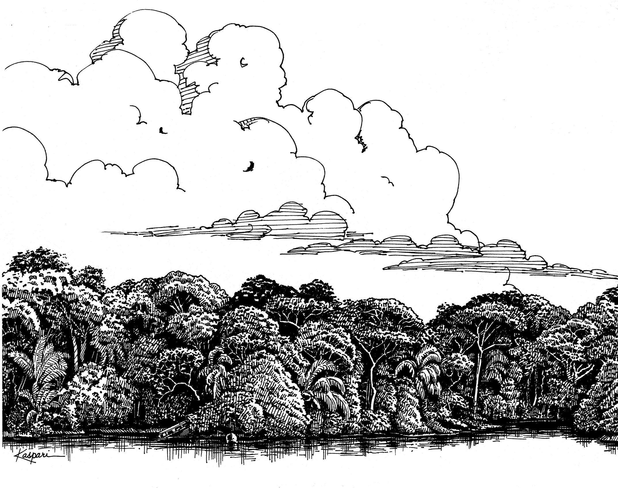 Plein Air Pen And Ink Drawings