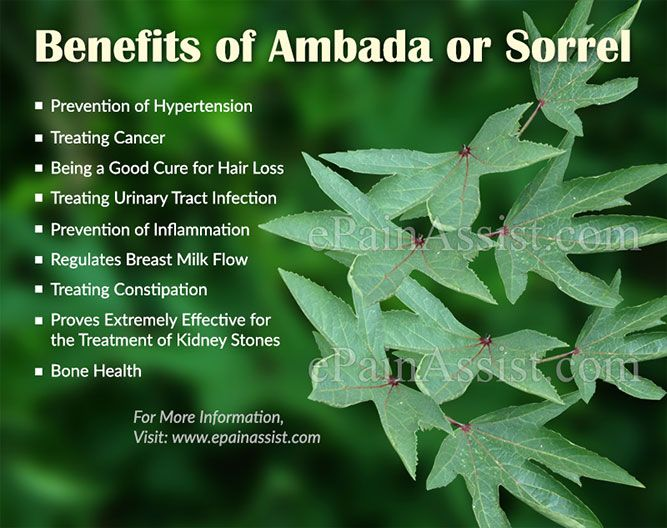 Benefits Of Ambada Or Sorrel Gongura Leaves Plant Benefits