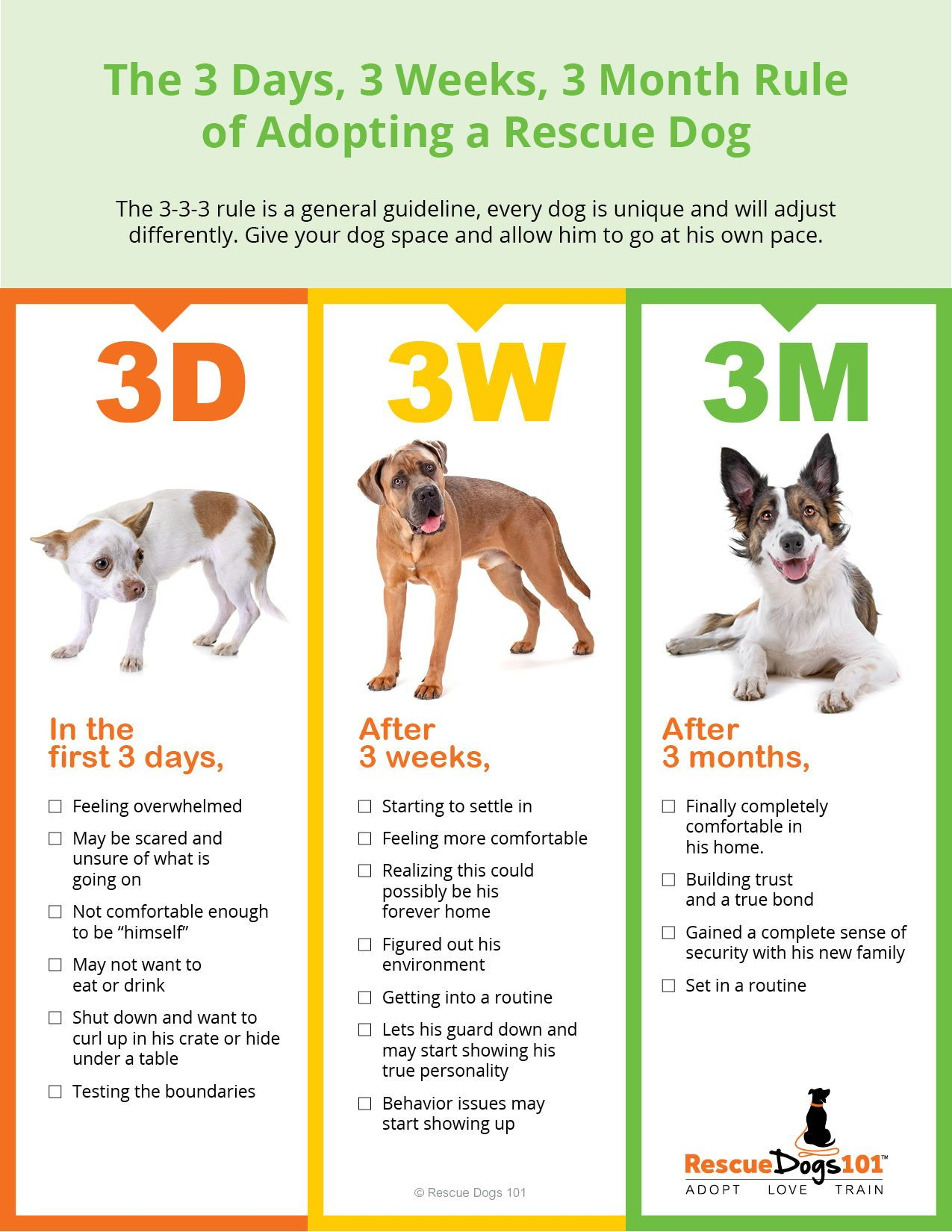 Creating Your Perfect Family Dog Adopt Love Train Rescue
