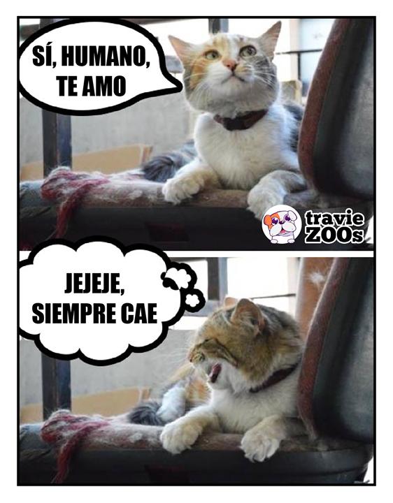 Te Amo Rdido Un Perro Cats Cat Life Animals