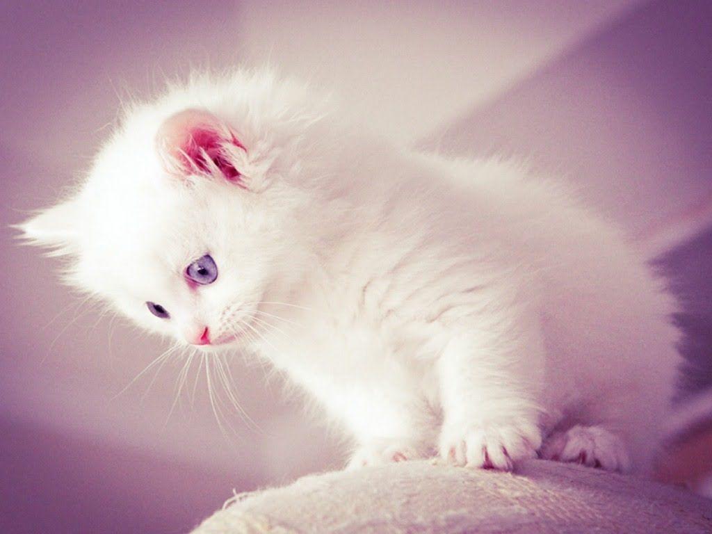 Cats Cute Cats Videos Of Cute Kittens 2016 Funny Cat In Kitten Videos Compilation 514 Kittens Cutest Beautiful Cats Ragdoll Kitten
