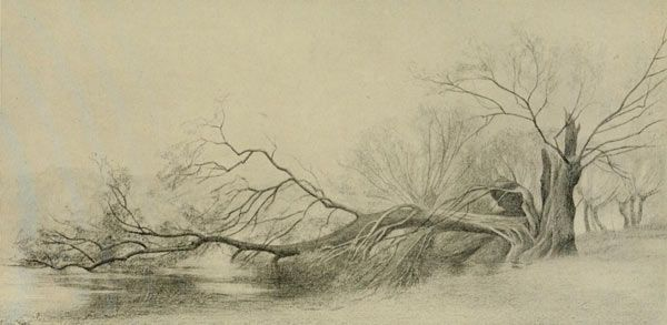 Fallen Willow Tree Tree Drawing Vicat Cole Anatomy Of Trees