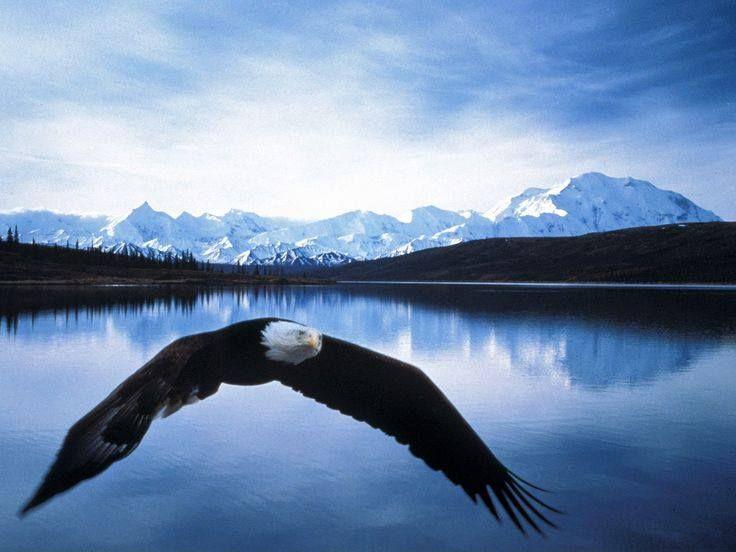 Patriotism In All 50 States Denali National Park Alaska Alaska Images Denali National Park