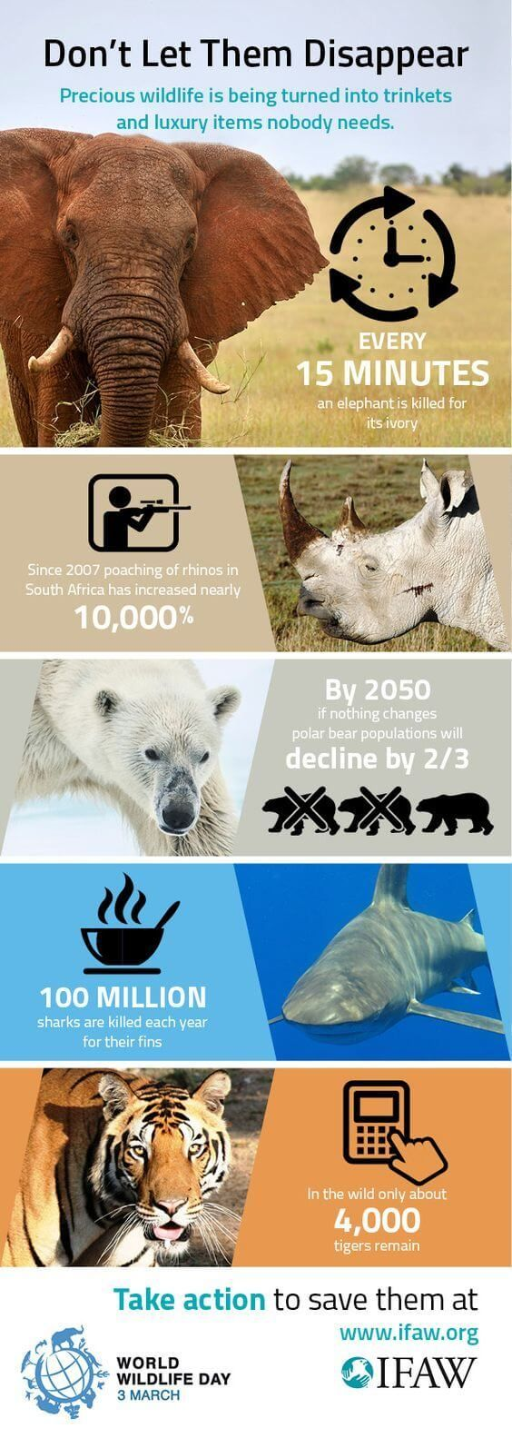 Endangered Animals Is It Too Late In 2020 Endangered Animals Animal Conservation Animals