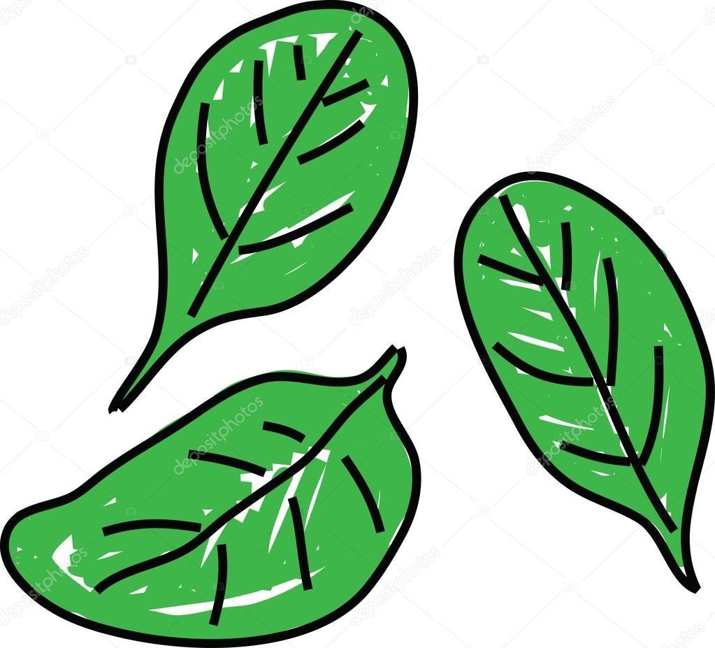 Espinacas hojas dibujadas a mano — Vector de stock | Manos dibujo
