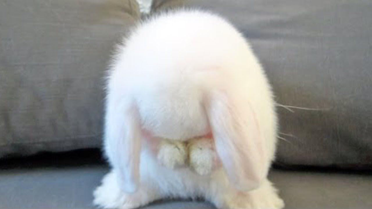 так, фото плачущий зайка кролик жизни каждого человека