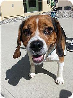 Dublin Ca Beagle Mix Meet Kepler A Dog For Adoption Http