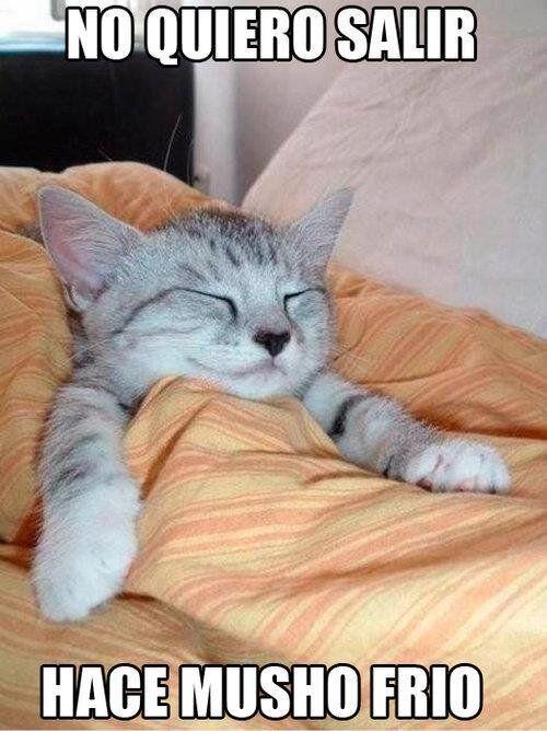 Con Frio Y Enfermo Gato Durmiendo Gatitos Divertidos Amo A Los Gatos