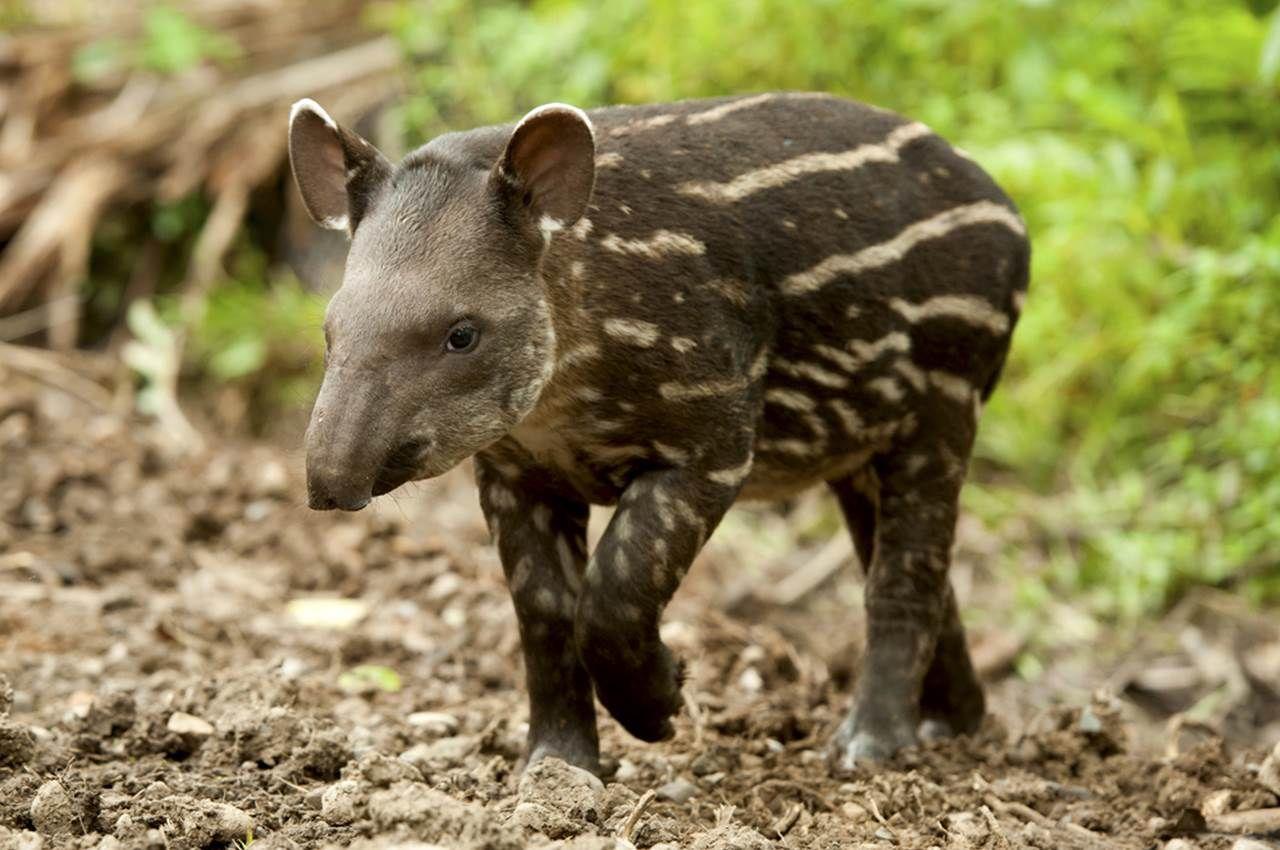 Holidays To The Amazon Ecuador Wildlife Holidays
