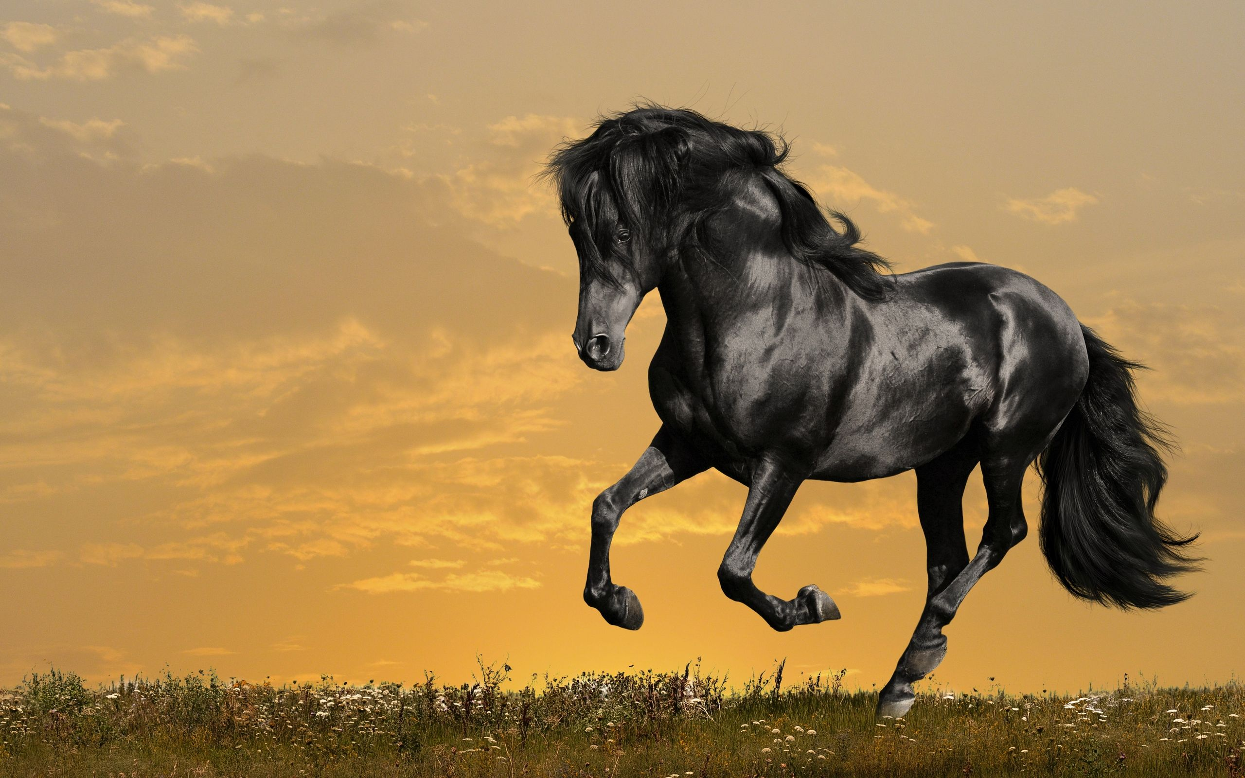 free black horse running wallpaper resolution 1920 x tags black horse running
