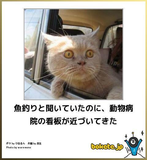 猫の画像大喜利 おかしな動物 猫 面白い猫の写真