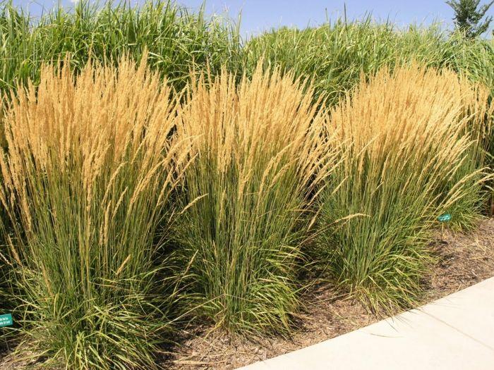 Gräser Garten dekorative gräser im garten wissenswertes und praktische tipps