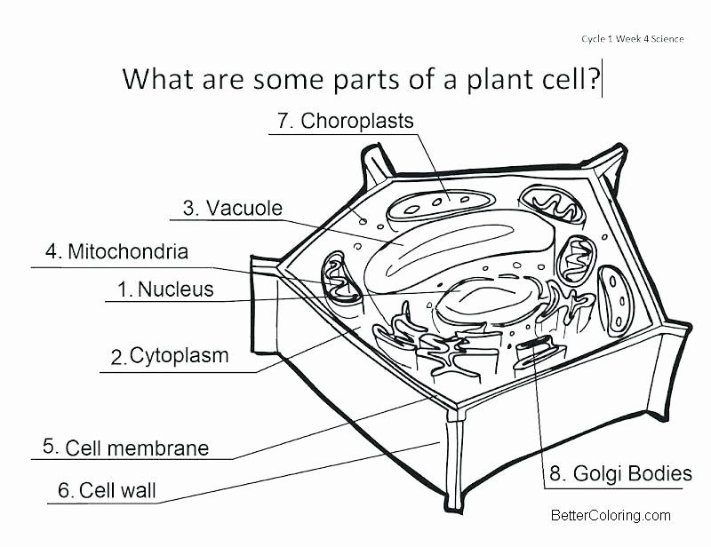 Plant Cell Coloring Page Beautiful Parts Of Plant Cell Coloring Pages Free Printable Animal Cells Worksheet Cells Worksheet Plant Cell