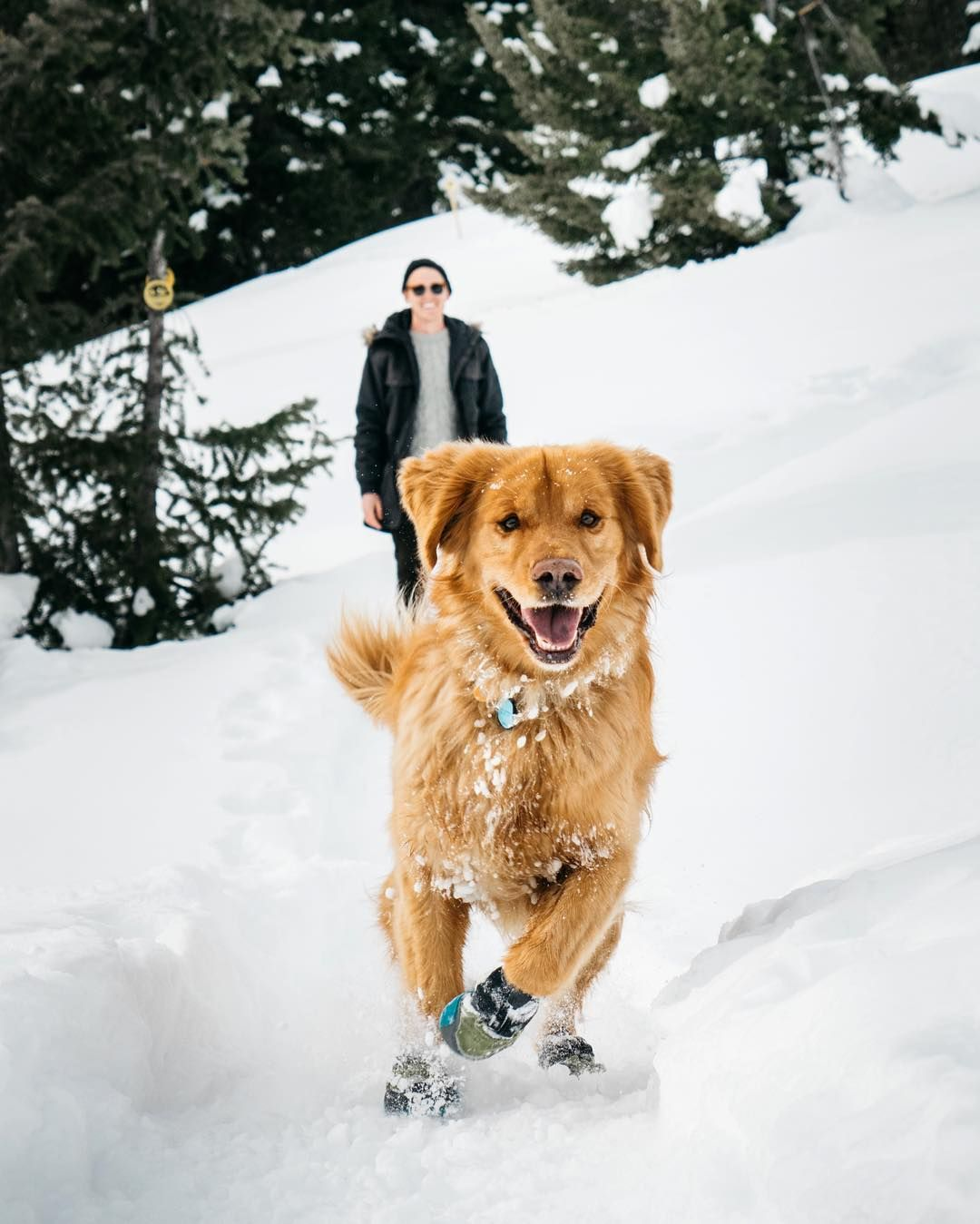 Aspen The Mountain Pup On Instagram There S Nothing Better Than