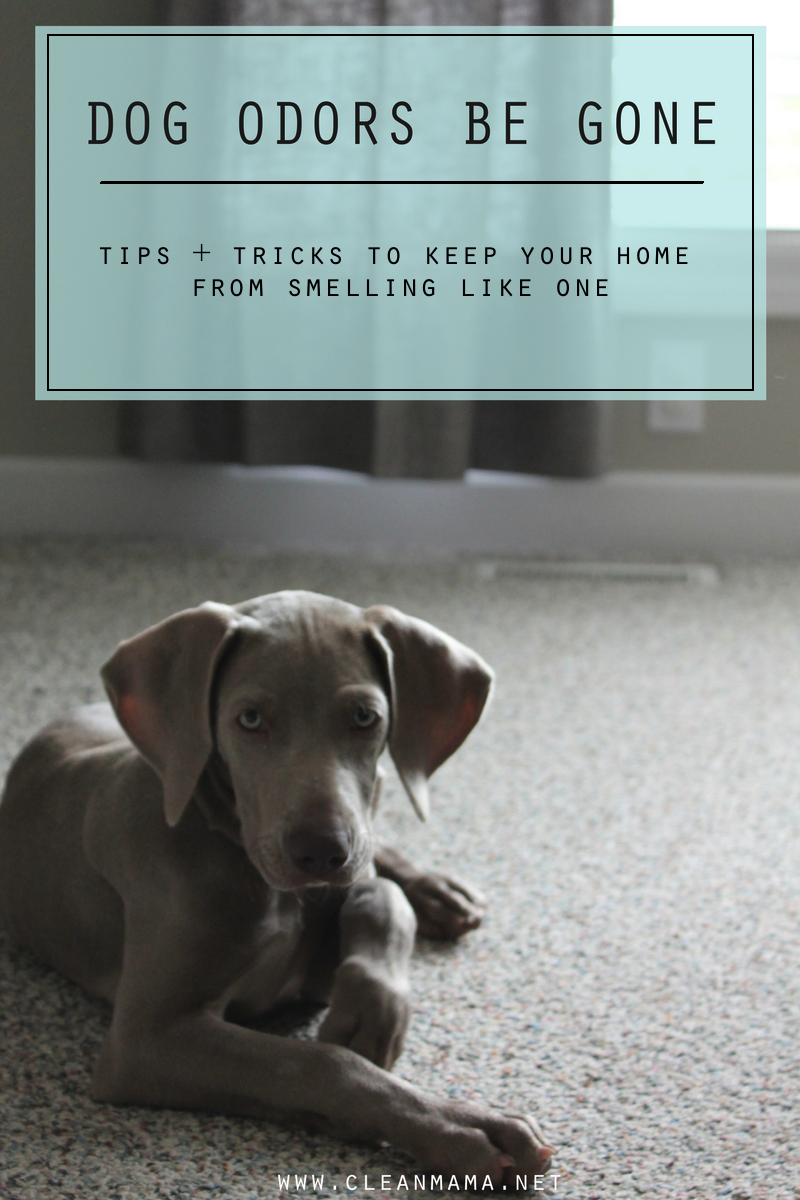 Love Dogs But Not The Smell So Much Check Out These Tips To Keep Your Home Smelling Fresh
