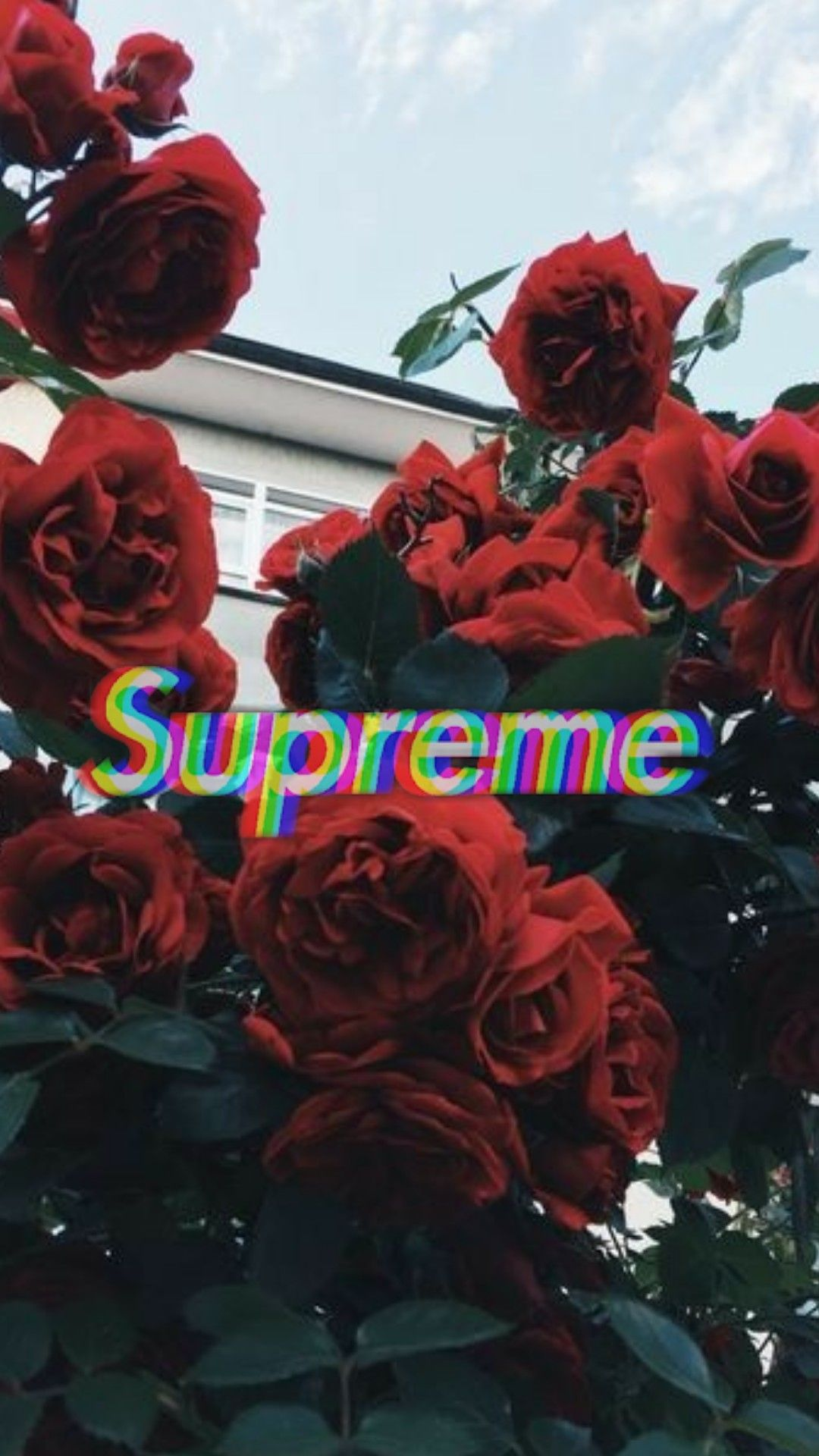 Roses Supreme Tumblr Wallpaper Supreme Wallpaper Supreme Iphone Wallpaper Supreme Wallpaper Hd