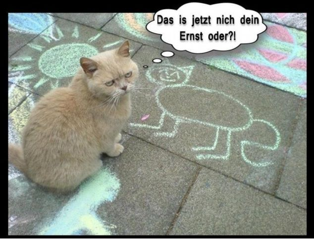 Lustige Katzen Bilder Neu Mit Bildern Katze Lustig Katzen