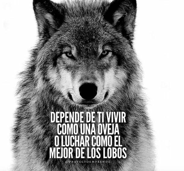 Resultado de imagen de Lobo solitario - Vdeo motivacin para todas aquellas batallas luchando solo