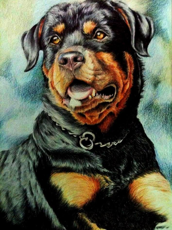 Rottweiler By Microcampabc On Deviantart Dogs Pinterest