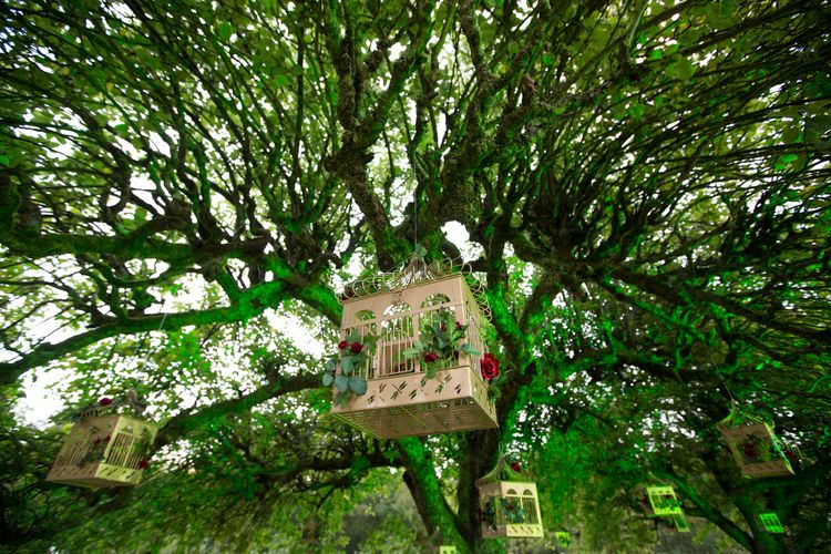 Bird Houses filled with flowers up in the trees |  Holly Clark Photography
