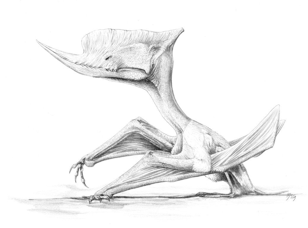 DeviantArt: More Artists Like Sinopterus dongi by jconway