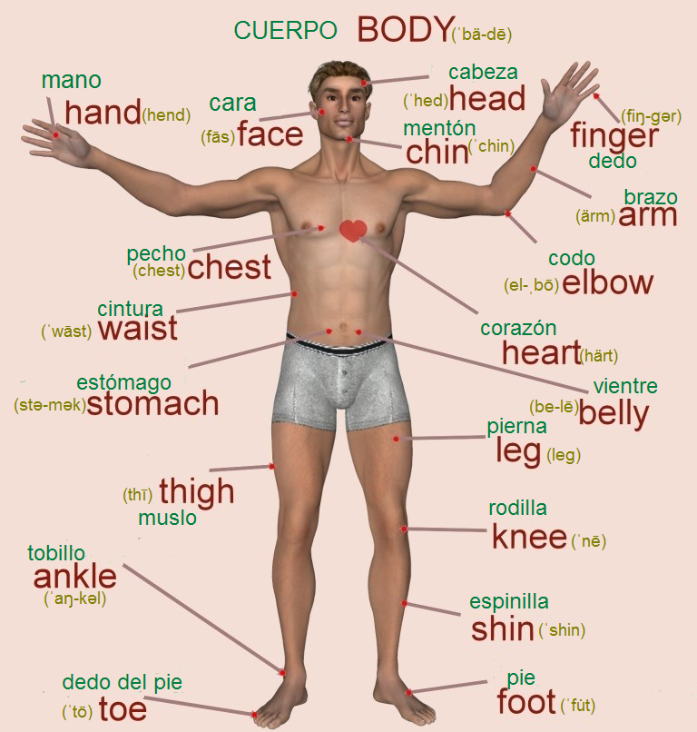partes de la pierna en ingles
