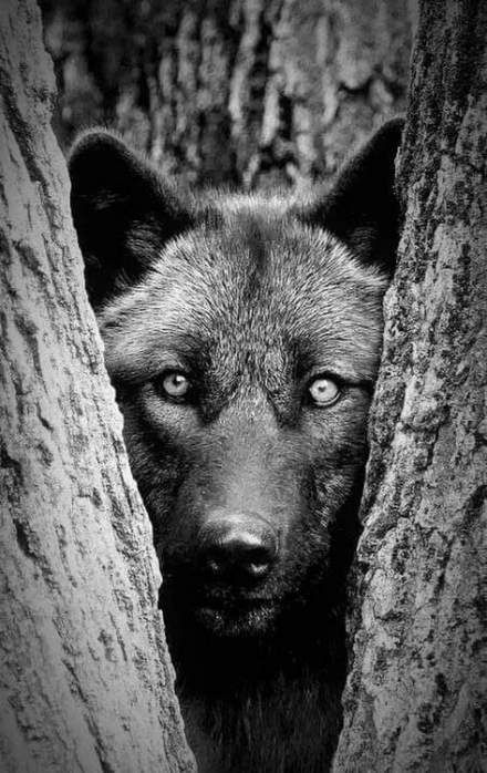 Photo of Photography black and white animals faces 43 Ideas